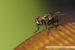 20121028-036 (ajakblackgoat) Tags: macro insect nikonmicro105mmf28 nikond700
