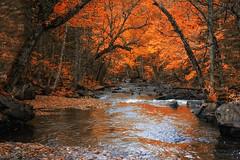 Red Reflection (Renald Bourque) Tags: wood autumn red canada color nature water automne canon photographer quebec quality québec arbre mastigouche lefion lefïon