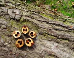 pretty nuts ;)