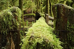 Cathedral Grove (careblairstare) Tags: moss cathedralgrove