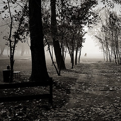 He leaves us ( Mikica Kosanovic ) Tags: autumn mist fall silhouette fog square tamron