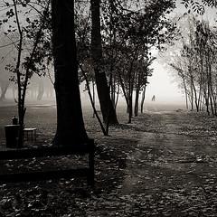 He leaves us ( Mikica Kosanovic ) Tags: autumn mist fall silhouette fog square tamron