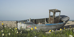 Dungeness (Chris Glover -) Tags: flowers abandoned boats boat tulips shingle dungeness marsh desolate headland romney foreland dafodil cuspate