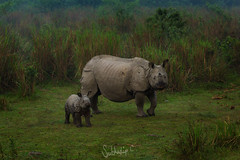 Mother & Child (Subhadip C, AFIAP) Tags: park india national rhino assam rhinoceros kaziranga subhadip