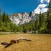 Ice cold Merced River - Yosemite - 2015