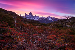 Flaming Myrtle (beaugraph) Tags: trees sunset red sky patagonia mountains argentina landscape colourful mountfitzroy
