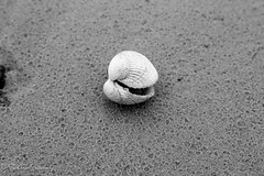 Coquillage (La photo & moi....) Tags: mer noir sable nb et plage blanc coque pche minimaliste coquillage crustac