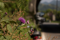 tour to countryside (K/Y2nd) Tags: macro canon eos d mark iii 100mm tokina pro 5d f28 m100 atx