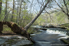 2watermark (Brian M Hale) Tags: ri trees west fall water river island waterfall spring woods stream brian greenwich newengland falls rhode hale secluded stepstone stepstonefalls brianhalephoto