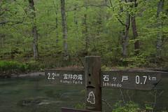 20160504-_DSF0380.jpg (kato_masashi) Tags: jp