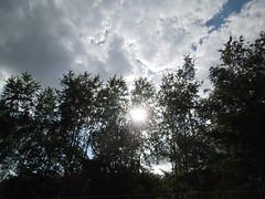 Flaschenhalswildnis (conticium) Tags: berlin kreuzberg schneberg wildnis flaschenhals parkamgleisdreieck flaschenhalspark