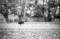 Minolta Hi-Matic G - Doggie (Kojotisko) Tags: bw brno creativecommons czechrepublic vx400 konicamonochromevx400 minoltahimaticg konicamonochrome