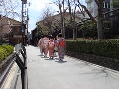 Pontocho (Satomi Grim) Tags: japan kyoto maiko geiko geisha kimono pontocho kitsuke