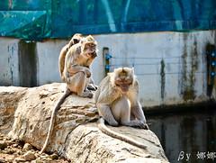 Cute Monkey (娜 娜☂Nana) Tags: cute love animal animals zoo monkey nikon expression expressions taiwan lovely 台灣 i 我愛台灣 新竹市立動物園 d7000