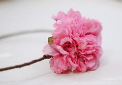 Fuchsia silk flower bridal hair wreath Boho (lazypolly) Tags: pink wedding brown bride fuchsia ribbon bridal boho silkflower headpiece hairwreath hairfacinator