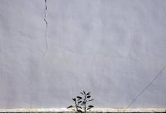 casi nada (maximorgana) Tags: cidade white wall compo crack mata poyo noncoloursincolour poyete