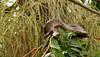 Jibóia/Boa constrictor (Ricardo Venerando) Tags: life green nature animal brasil cobra snake wildlife natureza olympus boa explore réptil discovery soe predador naturesfinest jibóia conservacion nationalgeografic platinumphoto diamondclassphotographer ysplix goldstaraward