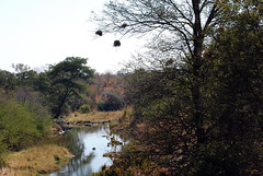 Victoria Falls_2012 05 24_1630 (HBarrison) Tags: africa hbarrison harveybarrison tauck victoriafalls zimbabwe zambeziriver mosioatunya