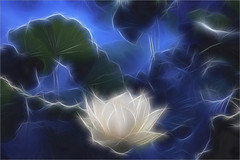 White Lotus Flower Surreal Series - Fractalius - DD0A7218-1-fr-1000 (Bahman Farzad) Tags: white flower lotus surreal series fractalius