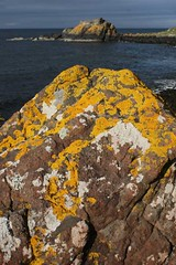 Rock and lichens Ballygalley (mykeebee) Tags: ireland coast co northern lichens basalt antrim ballygalley
