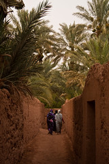 Between the palm trees (Nabucodonosor Perez) Tags: africa back women muslim palm arabic morocco arab adobe palmtree maroc marruecos palmera