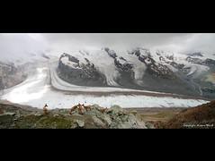 """""""Chamois"""" (Marcus Blank Photography) Tags: grass canon eos schweiz switzerland rocks suisse glacier 7d gornergrat zermatt wallis castor valais lense pollux chamois breithorn gams f4556 gornergletscher lyskamm sigma816mm"""