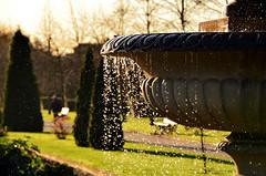 Morning's golden. (Florent Valentin) Tags: park morning sun london water fountain sunrise drops nikon eau londres fontaine parc goutte regentspark regents leverdesoleil aube d7000