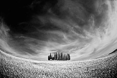 Center of Tuscany (Allard Schager) Tags: sky blackandwhite bw italy monument nature monochrome field barley june clouds daisies landscape spring nikon zwartwit curves scenic dramatic wideangle center panoramic unesco fisheye hills tuscany impact vista siena geography toscana valdorcia upclose 16mm vignetting toscane lente region eclectic italie hilltop biblical harsh bold 2012 cypresshill worldheritage zw utmost famousplace locallandmark beautyinnature sanquiricodorcia cypressgrove nationallandmark touristdestination nohdr singleraw nikcolorefexpro d700 nikond700 boschetto
