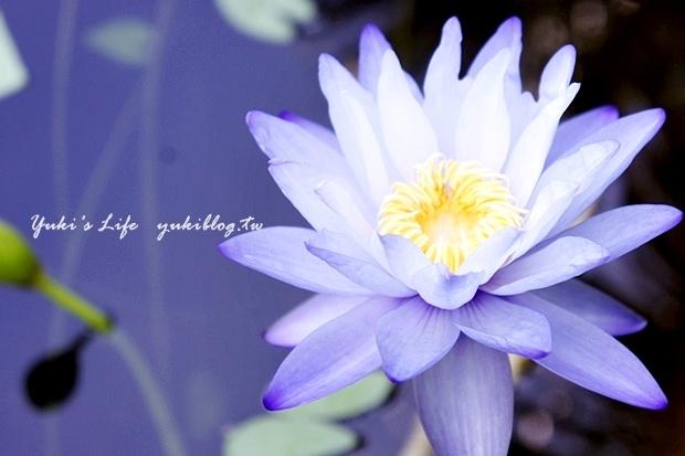 ┃頭城休閒旅遊達人來帶路┃I 淨水琉璃蓮花生態館‧一個充滿美麗蓮花與淡雅花香的地方‧養生蓮花餐