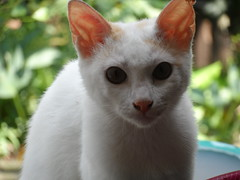 jing cat (Lhei | bBernas) Tags: food plants animals cat photography photo chocolate samsung ferrero leolyn w150f
