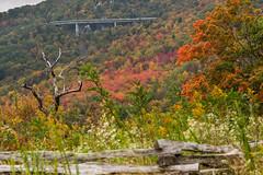 The Linn Cove  Viaduct (Jarrett Jones) Tags: blue fall rock canon nc unitedstates cove mark iii northcarolina blowing linville viaduct foliage ridge parkway 5d linn miii 24105 mkiii