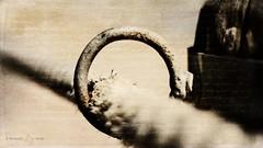 Through the Hoop (Sashjasu) Tags: texture fence hoop circle kim rope klassen layers beyond friday ecourse