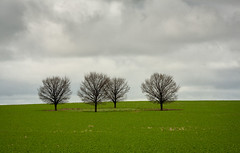 Four trees (RWYoung Images) Tags: trees field canon landscape countryside farm 5d rwyoung