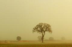 The Mist (Trotaparamos) Tags: mist valladolid finepix fujifilm silkypix fseries torozos f900exr finepixf900exr trotaparamos