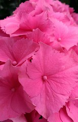 pink (Rick Takagi) Tags: flowers macro one sample m8 htc flickrandroidapp:filter=none