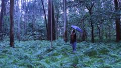 129/366: humidity (Andrea  Alonso) Tags: naturaleza selfportrait verde green me nature forest umbrella myself spain woods yo galicia bosque 365 autorretrato paraguas vigo humidity humedad 366