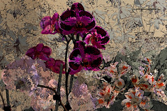 ORCHIDS FESTIVAL (Viktor Manuel 990) Tags: flowers flores mxico painting orchids digitalart impressionism artedigital orquideas pintura quertaro impresionismo victormanuelgmezg