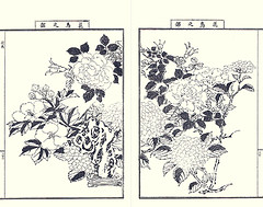 China rose, bigleaf hydrangea, cotton-rose and unknown bird (Japanese Flower and Bird Art) Tags: china flower bird art rose japan japanese book picture rosa hibiscus hydrangea malvaceae nihonga intaglio chinensis rosaceae mutabilis bigleaf macrophylla hydrangeaceae cottonrose yasujiro matama readercollection