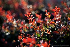 IMG_1282s21FAD (Foto_A_Day) Tags: vintage lens bokeh foliage 55mm exa exakta steinheil f19 bokehlicious quinon