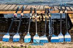 Veslárska regata o pohár SNP-131
