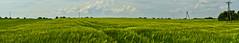 Barley fields panorama (ChemiQ81) Tags: summer field barley nikon outdoor sommer poland polska polish pole jura polen nikkor jurassic polonia pologne  polsko lato zawada puola plland lenkija lengyelorszg lengyel pollando zawiercie  poola poljska polija posko pholainn  zagbie dbrowskie szczekociny jczmie szlakiem jemen    irzdze pilicka chemiq jurajskim polanya lengyelorszgban