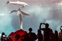 5D__5370 (Steofoto) Tags: genova porto pesci acquario darsena crostacei rettili cetacei molluschi