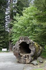 Hollow Stump (Heath & the B.L.T. boys) Tags: california tree stump redwoods oldgrowth