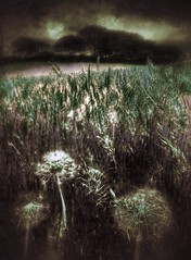 (Matt Brock ) Tags: trees sky blur field dark landscape moody scratches dandelion seedhead grasses brooding vignette hdr atmospheric dandelionclock mobilephotography iphoneography