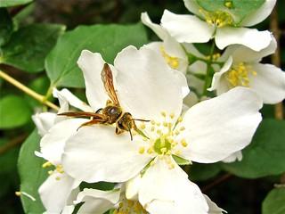 Native Nectar.