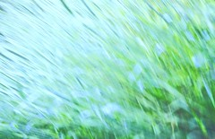 Float like a butterfly, sting like a bee. (Michael Degenhart) Tags: blue abstract green nature grass movement wind ali mohammed