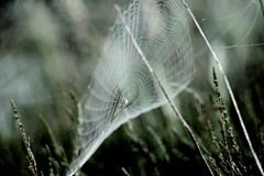 Sailing (ursulamller900) Tags: spiderweb meadow spinnwebe morningdew pentacon28100