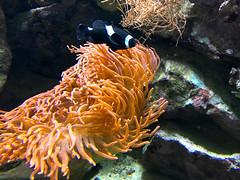ZooWuppertal_BotanischerGartenRUB 2016_19 (spookybine) Tags: zoo wuppertal animals tiere nature natur underwater unterwasserwelt sea water fish