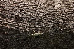 IMG_2325 (ali65852002) Tags: canon iran lizard kermanshah d1100