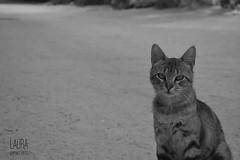 Black&White (laura5mateo) Tags: white black blakandwhite animal cat nikon nikono nikond3300
